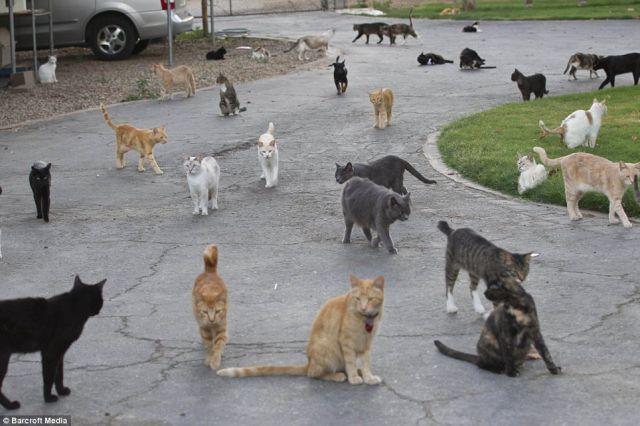 mimpi banyak kucing