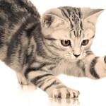 Mimpi Dicakar Anak Kucing
