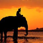Mimpi Naik Gajah