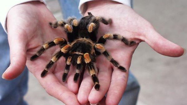 tafsiran mimpi labah-labah