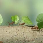 mimpi semut