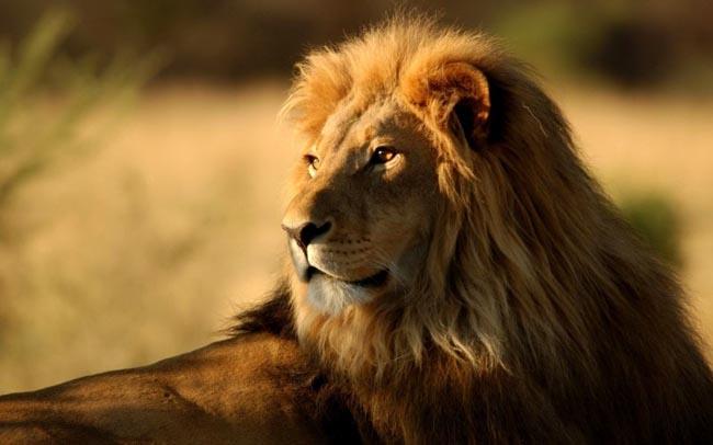 tafsiran mimpi singa