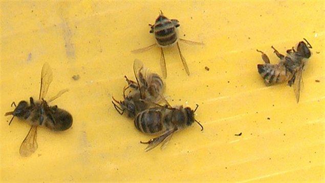 mimpi lebah mati