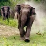 Mimpi Dikejar Gajah