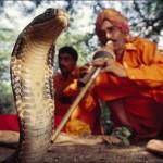 mimpi pemain ular