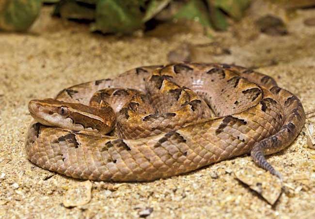 tafsir mimpi ular kapak