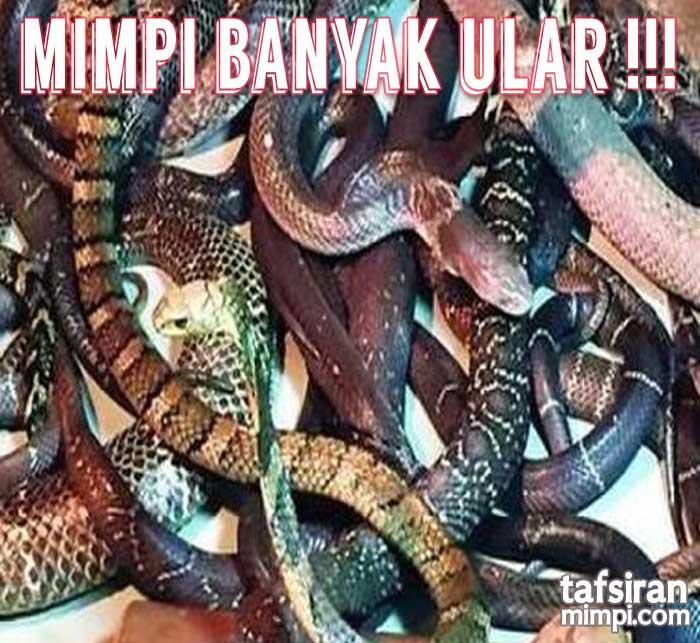 mimpi banyak ular tafsir